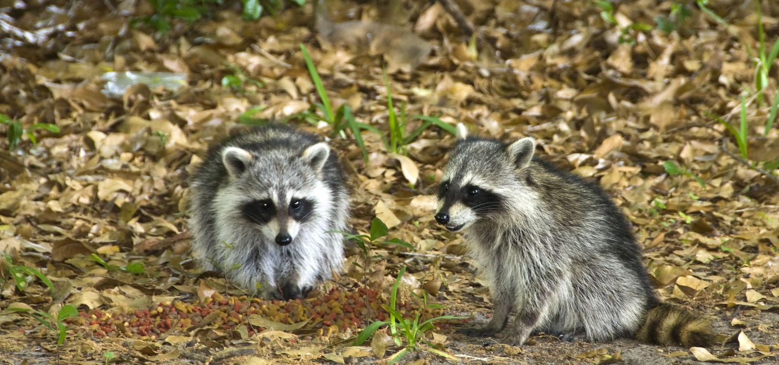 <div class='slider_caption'> <h1>Safe & Humane Wildlife Removal</h1><a class='slider-readmore' href=''>Read More</a>   </div>
