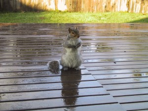 A squirrel sitting on a deck