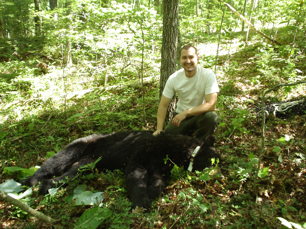 Chad Soard radio collared a Black Bear in KY