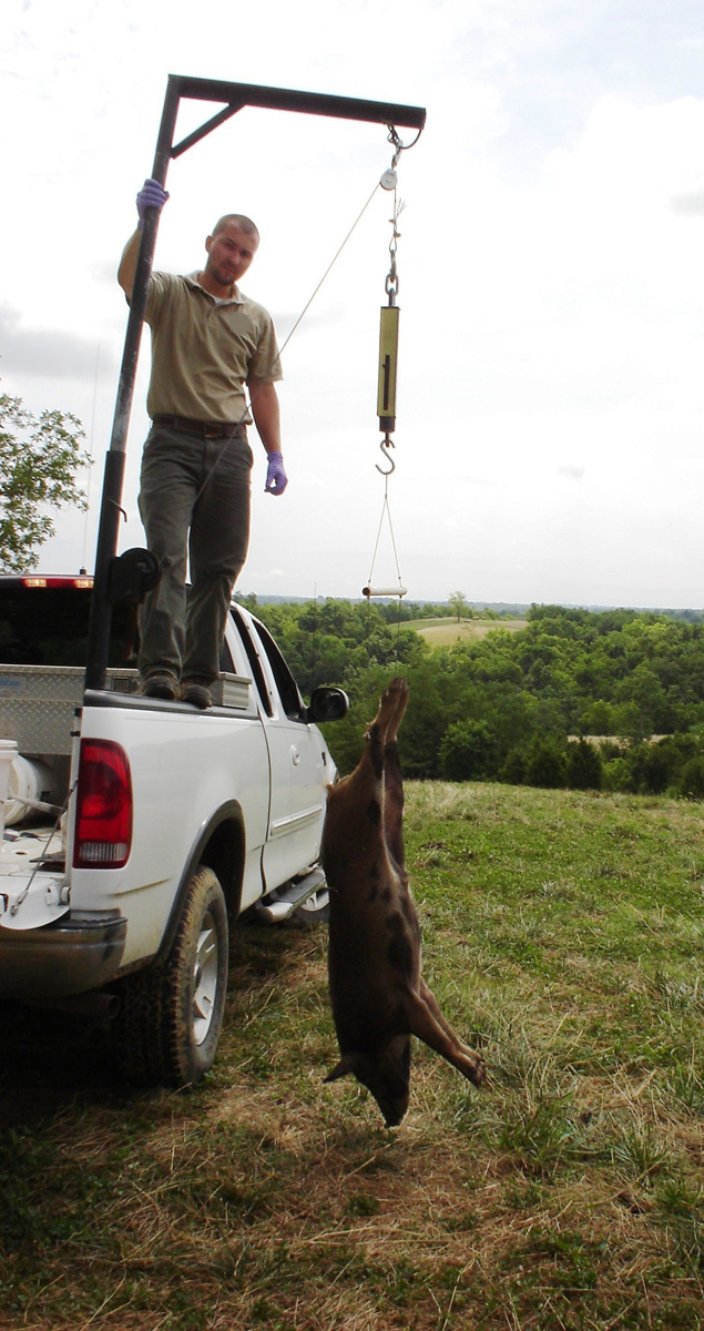 Chad conducting wild pig management in Central KY