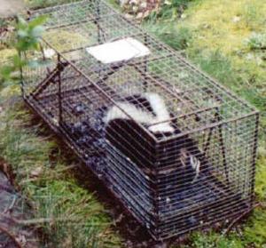 skunkcontrol