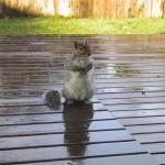 A squirrel sitting on a deck