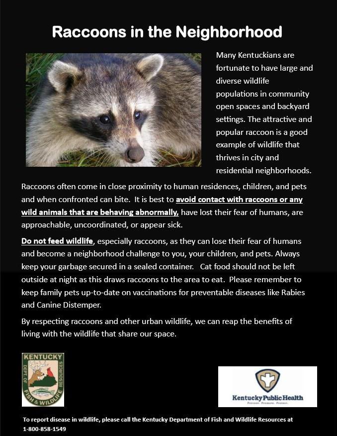 Suburban Raccoons Thrive in Neighborhoods Poster