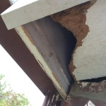 Soffit of a Lexington Ky home that has been chewed by a gray squirrel