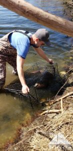 Chad with a trapped beaver from a Lexington reservoir