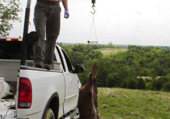 Photo Gallery Trifecta Wildlife Services